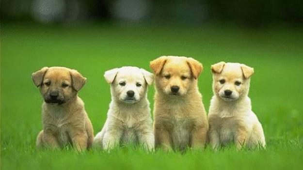 cachorro-fofo-006