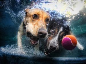 foto-de-cachorro-embaixo-da-agua-010